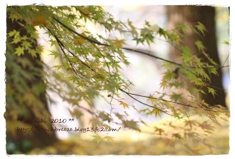 IMG_6241-1.jpg