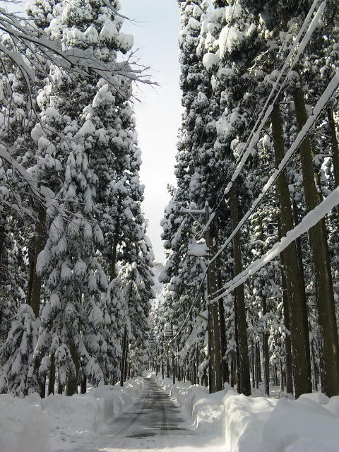 20091220雪池田