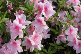 花香るwsx