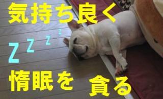 惰眠wsz