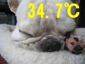 猛暑qwe