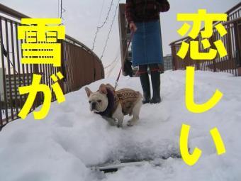 雪がqwe