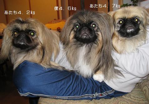 2009-11-24-1-3peki.jpg