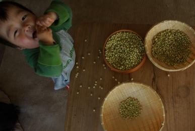 大豆仕分け2