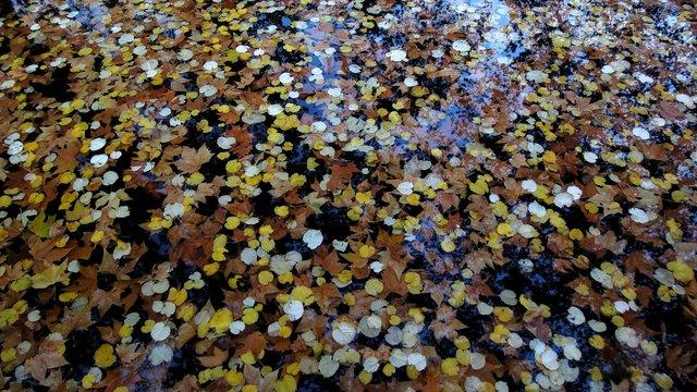 メディシスの泉の水面