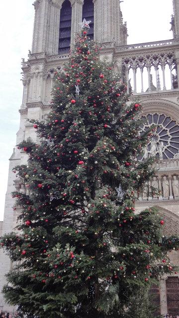 パリのノートルダム大聖堂前のクリスマスツリー