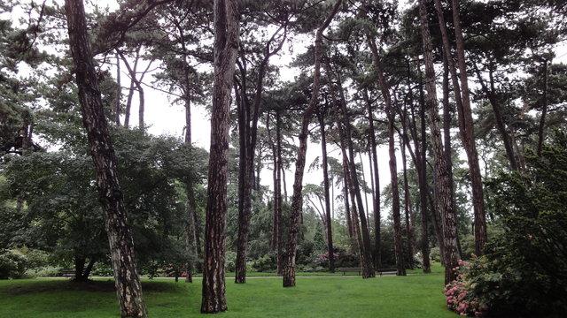 パリ花公園:雨上がり