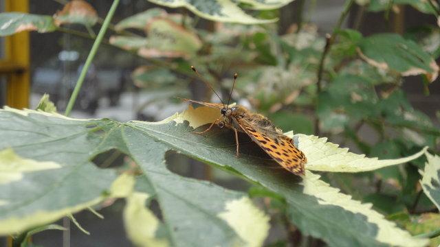 パリ花公園:蝶