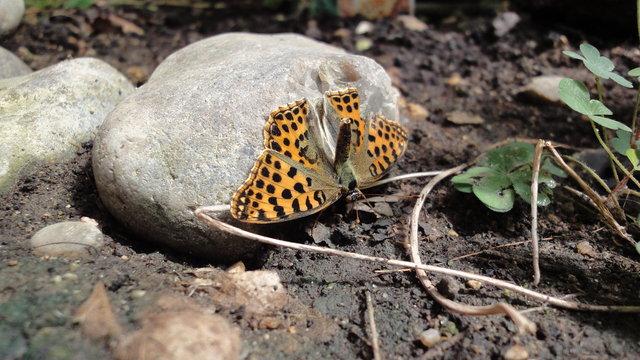 パリ花公園:蝶はヨガをします