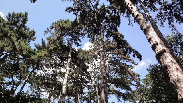 パリ花公園:森
