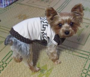 BONBON犬服