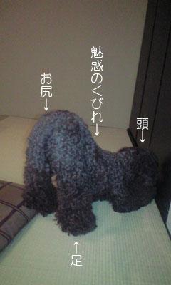 fusuya100730_2.jpg