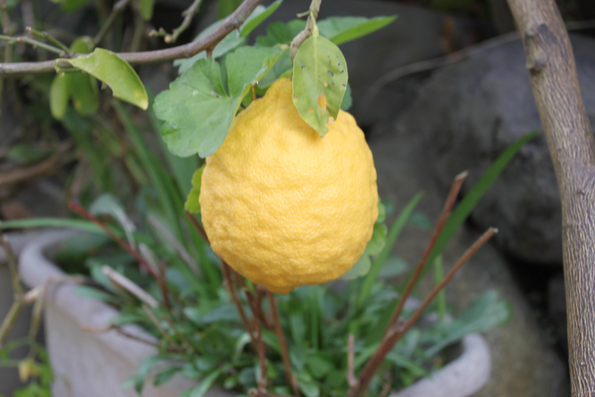 黄色い実を発見!