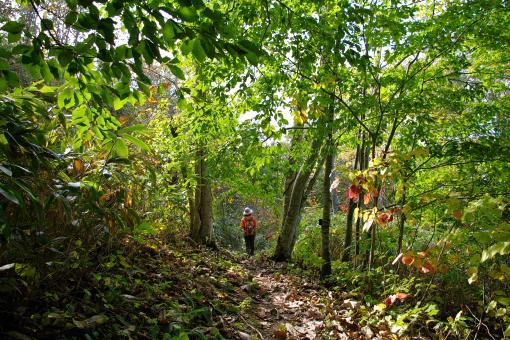 5ブナの森歩き