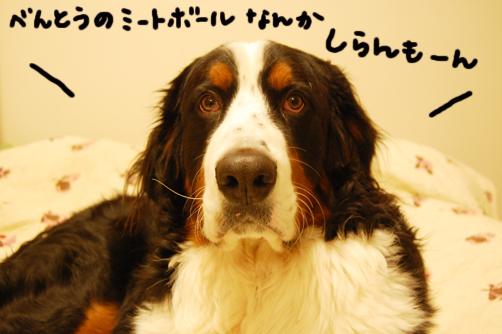 mi-tobo-ru.jpg