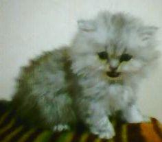ネコの写真5-13更新 235-2