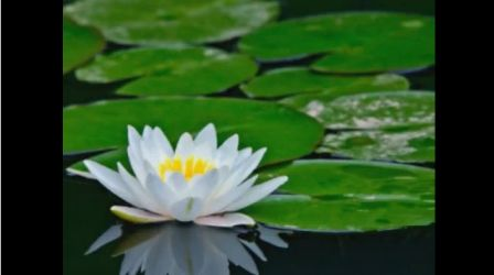 puriya dana veena