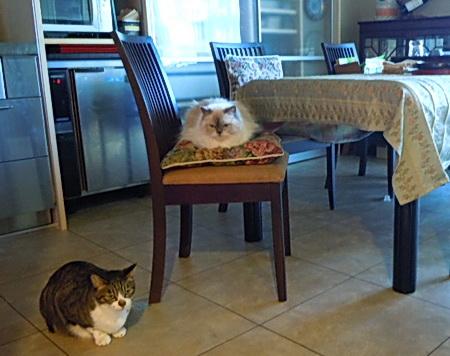 ご飯を待つ子たち