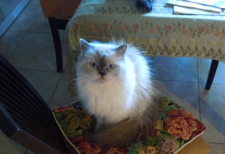 ご飯を待つ愛猫