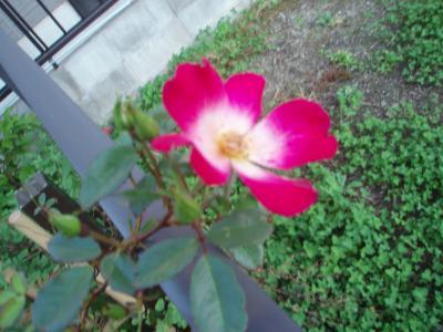 PA273154_convert_20091030211229.jpg