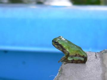 雨蛙の子供達 (2)