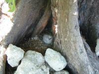 bird island birds 1