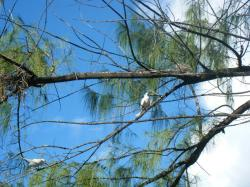 bird island birds 3