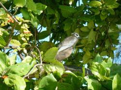 bird island birds 4