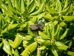 bird island birds 5