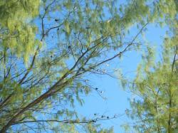 bird island birds on branch