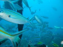 guam fish 200910 13