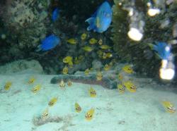 guam fish 200910 12