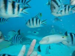 guam fish 200910 11