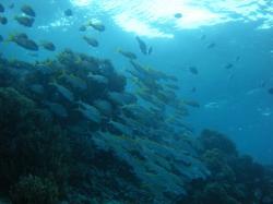 guam fish 200910 16