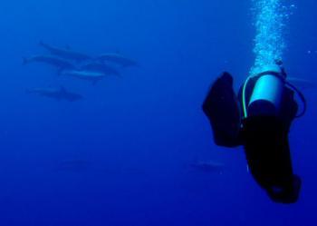 blue corner dolphins