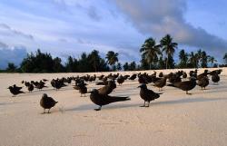 bird on beach at sunset bird island