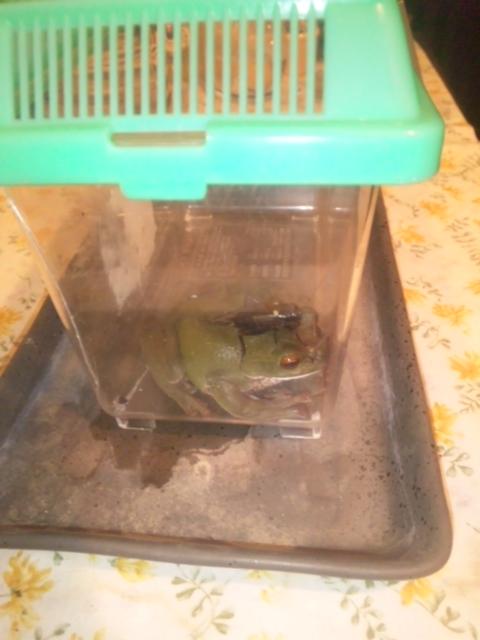 カエルとエサ