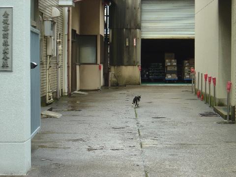 貴重なねこさん(2009.08.10)
