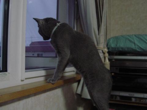お外見ニコ01(2009.08.13)