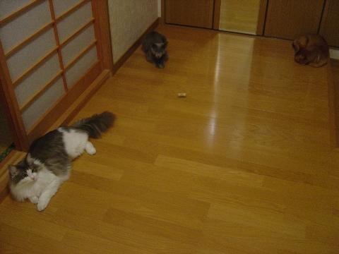 直角三角形(2009.08.17)