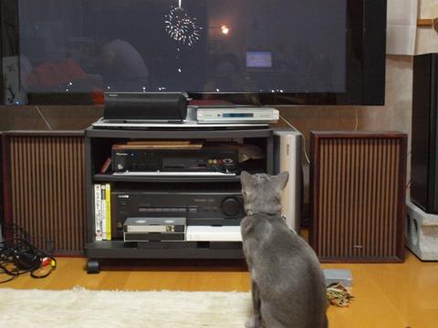花火を見る二コ(2009.08.22)
