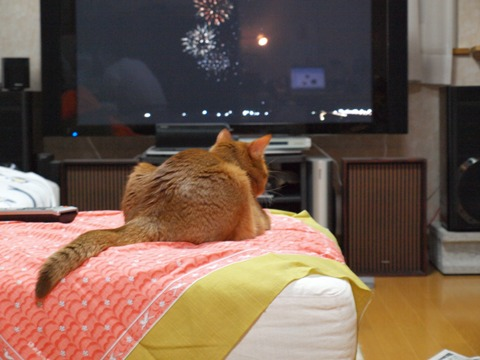 花火を見るジョゼ(2009.08.22)