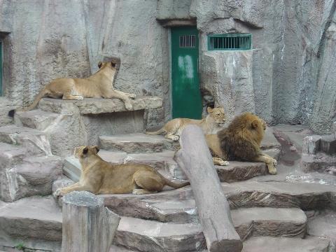 ライオンさん(2009.08.23)