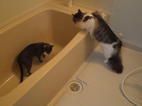 お風呂好き?(2009.08.27)