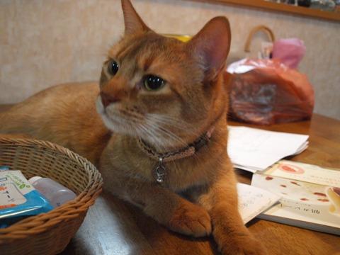 なにかしら?なのよっ(2009.08.27)
