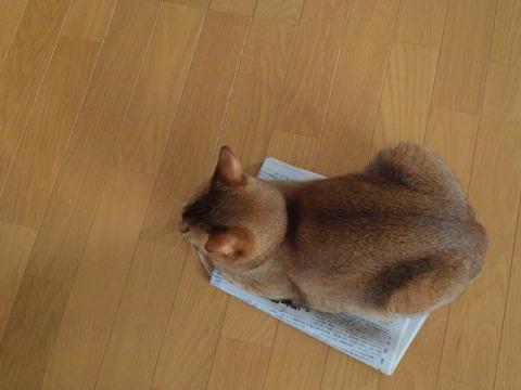 新聞好きなのよっ、上から(2009.09.03)