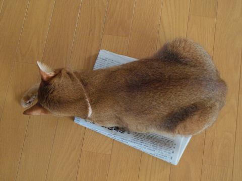 新聞好きなのよっ、毛づくろい(2009.09.03)