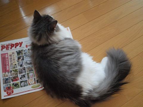 ペピィの上でしゅ(2009.09.03)
