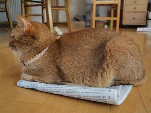 新聞スキなのよっ2009.09.03)