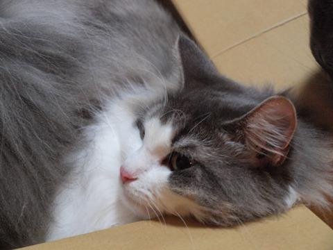 箱入りフレイヤ01(2009.09.03)